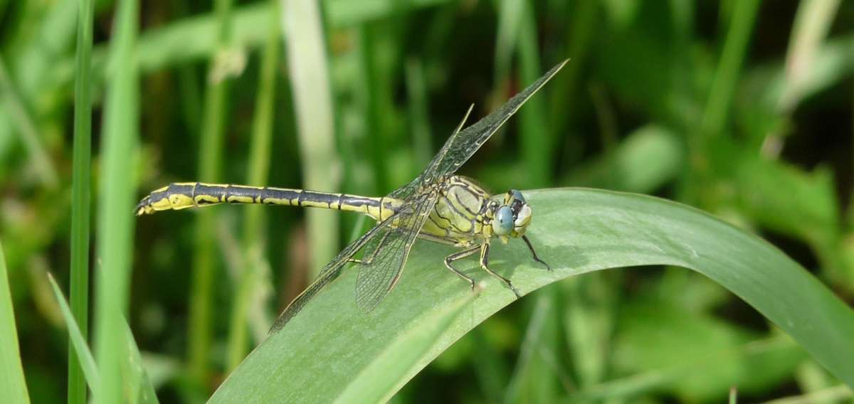 Fauna (22b)