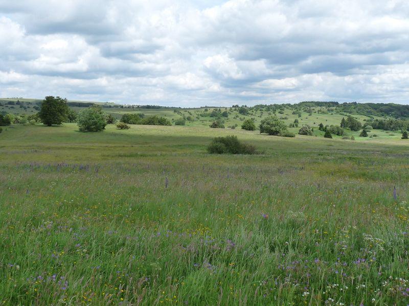 Landschaft (7b)